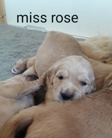MISS ROSE 16 JOURS